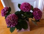 Blommor i finsk vas