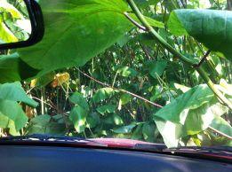 """Med bilen i en """"djungel"""""""