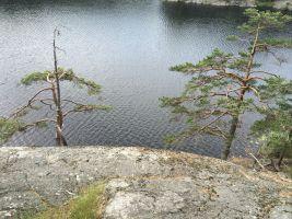 Naturen 11 juni 2014 nr 19 tallar