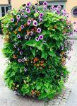 Blommor i Vaxholm 1