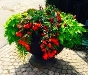 Blommor i Vaxholm 2