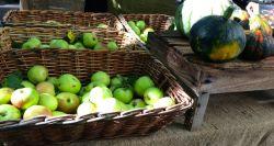 Bondens marknad äpplen och pumpor