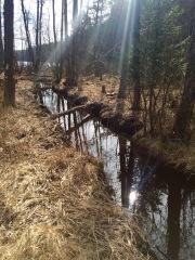 Liten å i skogen 27 mars 2016