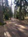 Skogen 27 mars 2016 bild1