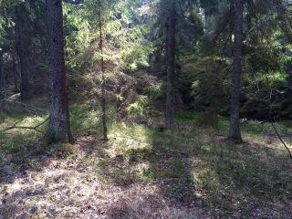 Skogen 27 mars 2016 bild 2