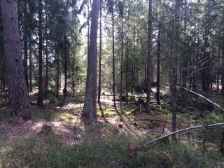 Skogen 27 mars 2016 bild 3
