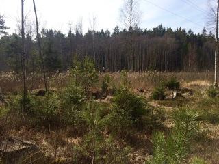 Skogen 27 mars 2016 bild 4