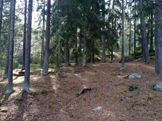 Skogen 27 mars 2016 bild 5