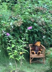Björn och björnbär i koloniträdgård
